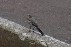 たまたま居た鳥さんも撮影(笑).jpg