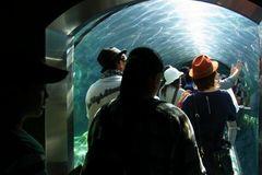 ペンギン館のトンネル.jpg