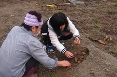 土にかぶせてある芋を回収〜.jpg