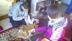 嫁さんの親戚の家の猫.jpg