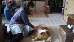 猫に触りまくる友希ちゃん(笑).jpg