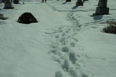雪少ないけど、埋まるもんは埋まります.jpg